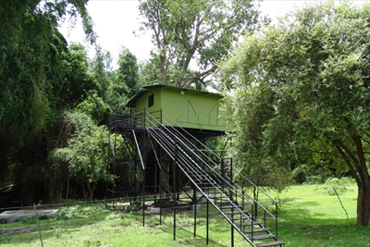 Masinagudi Tree House