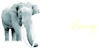 Secret Ivory